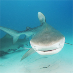 KEY WEST EXTREME ADVENTURES SHARK TOUR